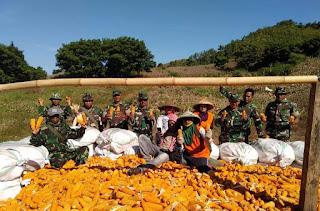 Koramil Empang Turun Bantu Petani Panen Jagung