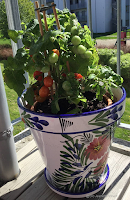 Gro Jeanettes tomatplante 2018.