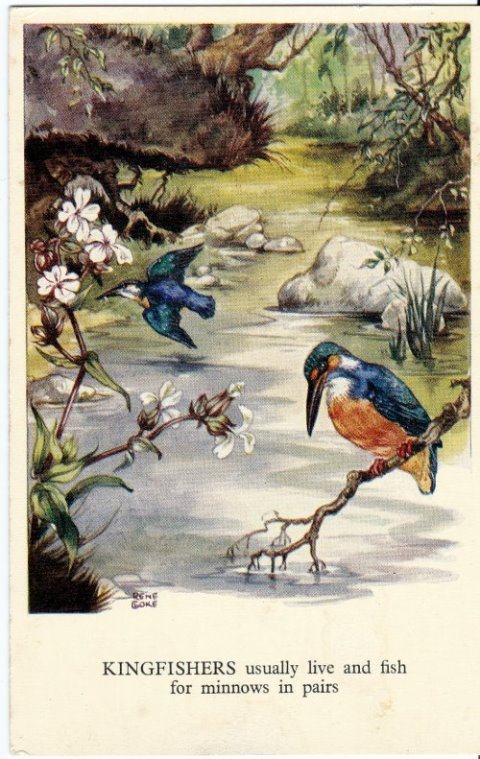 rene cloke postcards kingfishers