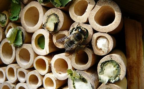 Insectos beneficiosos para el Huerto