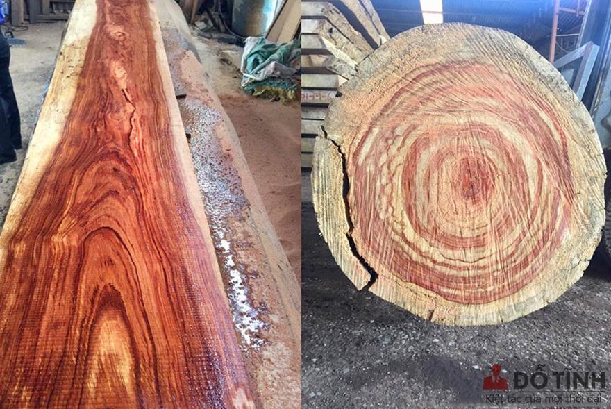 Tìm hiểu những loại gỗ quý hiếm nhất việt nam hiện nay