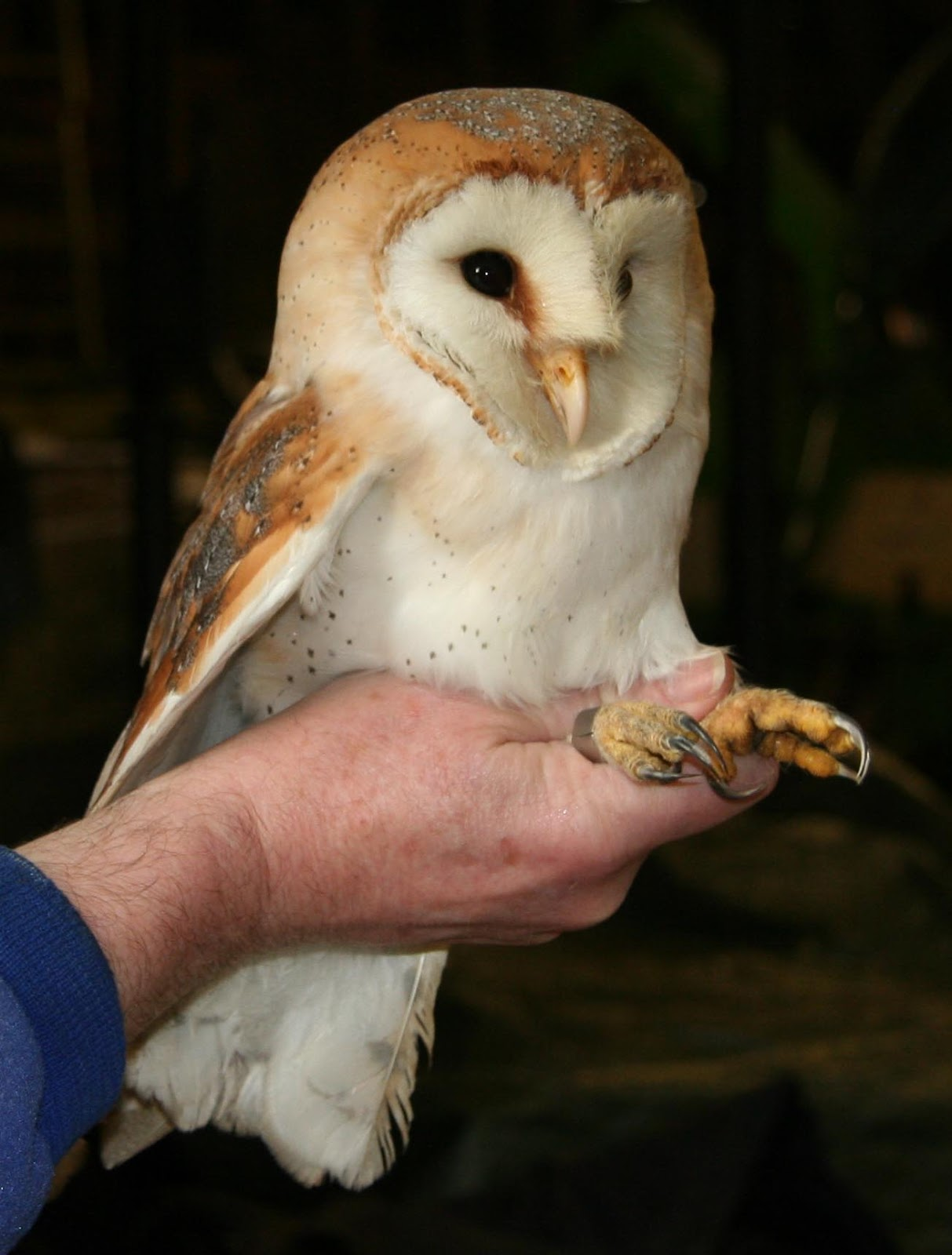 Bisham Barn Owl Group National Trust Owl Boxes