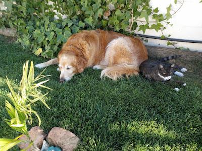 Hund och katt under vapenvila