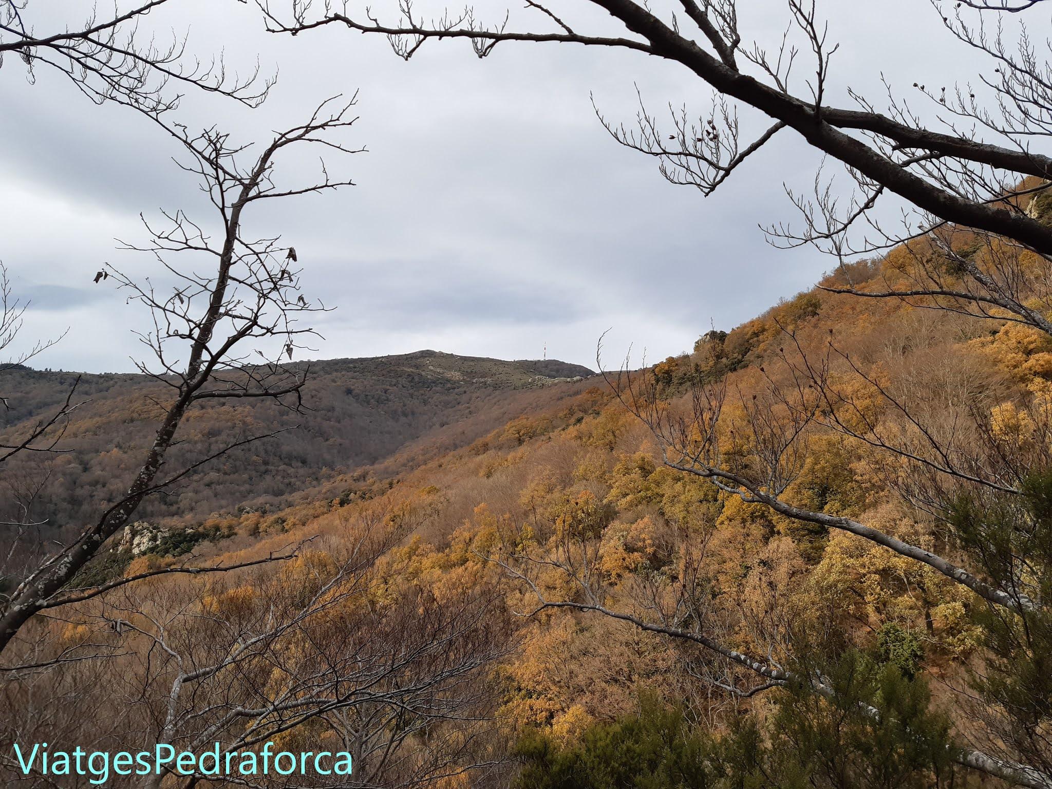 Alt Empordà, Catalunya, tardor, colors de tardor, boscos caducifolis