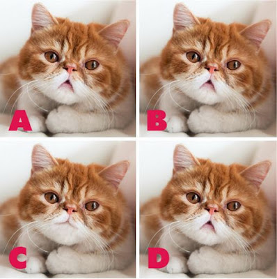 Which image is different? image 7