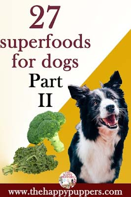 27 superfoods for dogs