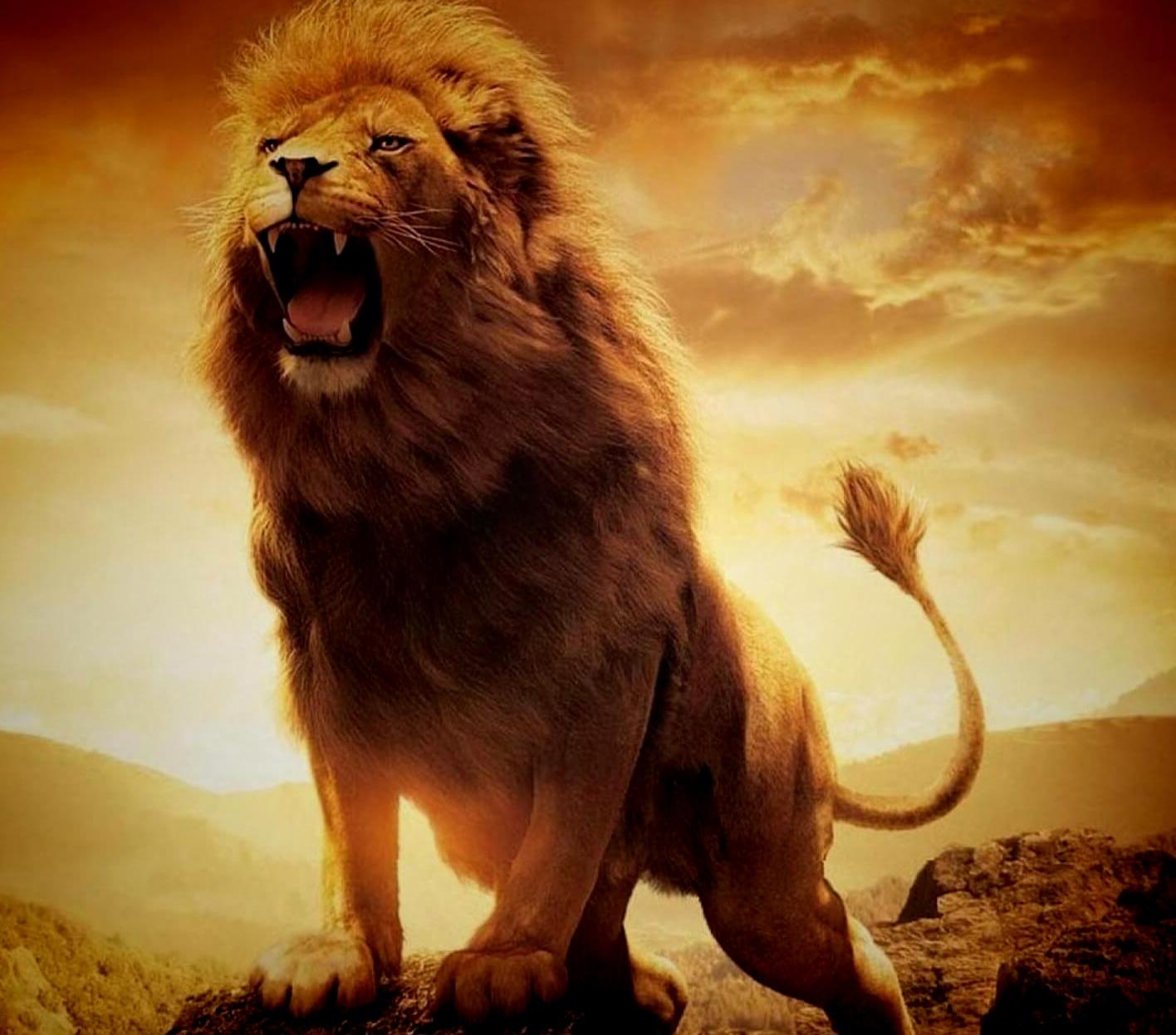 Gambar Singa Keren Keren