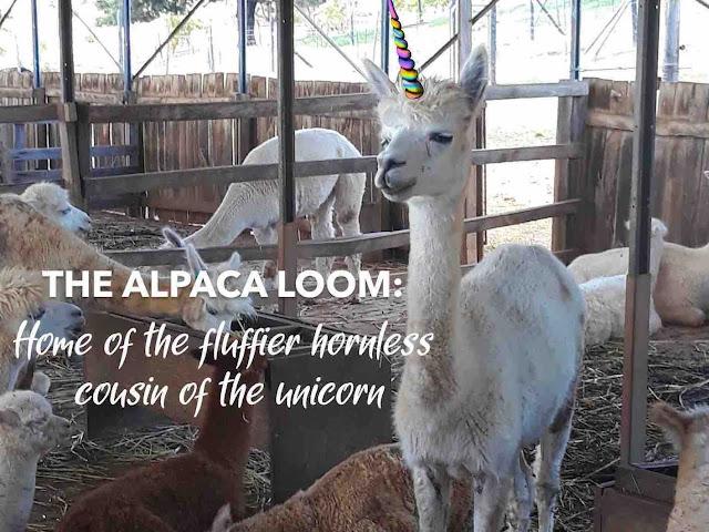 Title page: Alpaca Loom, Paarl - Review