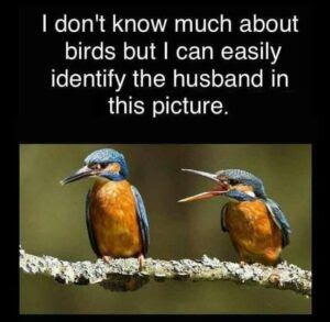 Do not know much about birds BUT...