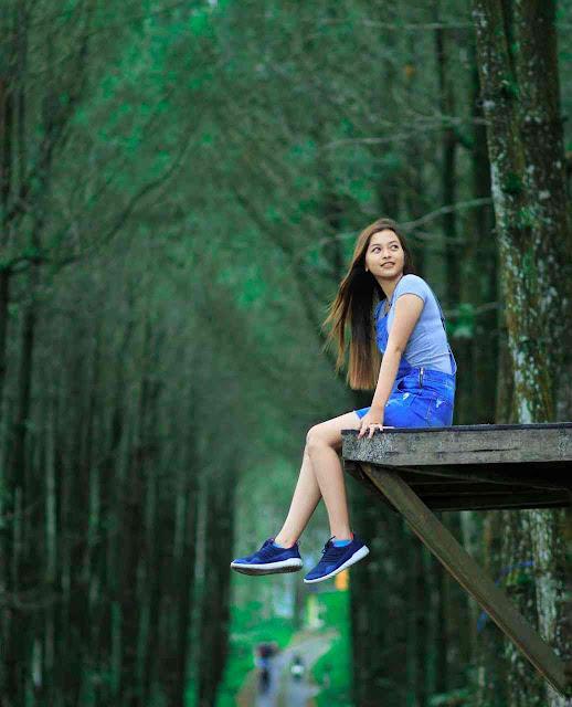 Hutan Pinus Kragilan Magelang: Lokasi, Rute, dan Harga Tiket Masuk