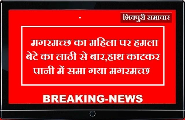 मगरमच्छ ने हमला कर महिला का हाथ खा लिया, बेटे ने लाठी से पीट कर जान बचाई / SHIVPURI NEWS