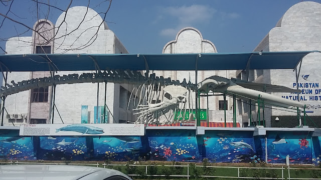 Pakistan Museum of Natural History (Islamabad) Pictures and Information