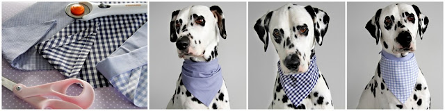 Dalmatian dog modelling three different blue dog bandanas