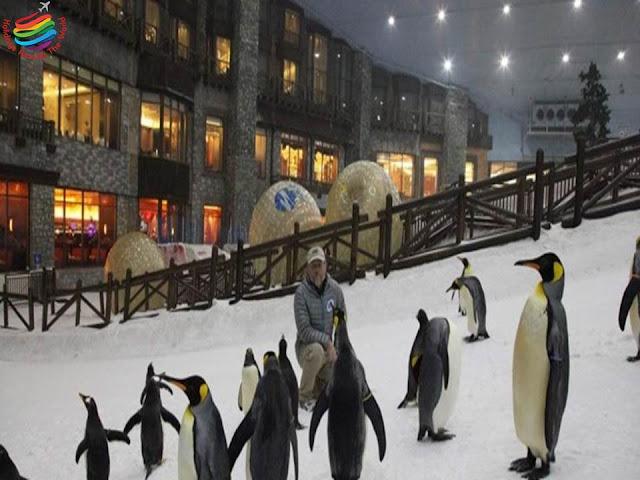Penguins - Ski Dubai