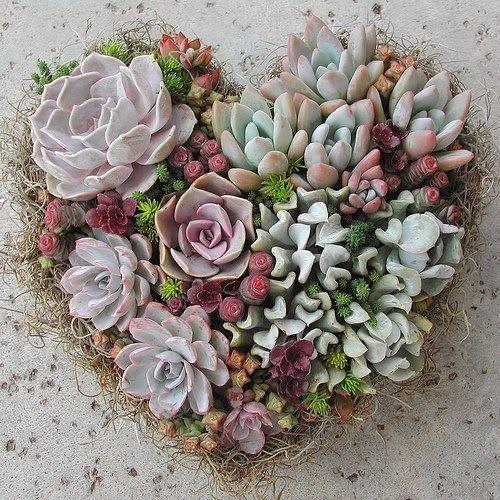 blog Achados de Decoração. Cactus e suculentas