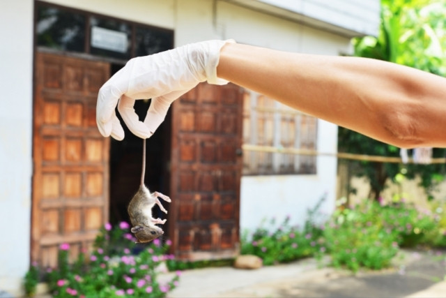 how-to-get-rid-of-mice-urine Odor