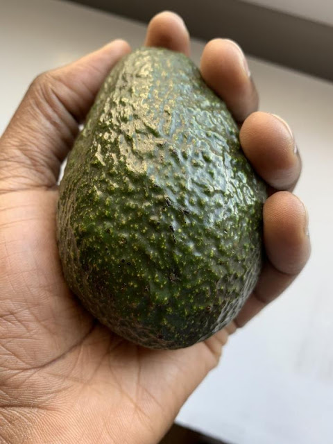 avocado farming in Kenya