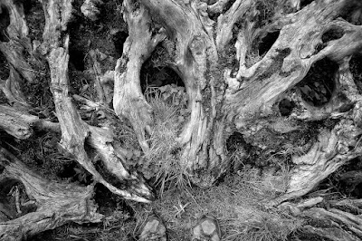 A photo looking down at me feet, with twisted tree roots spreading out