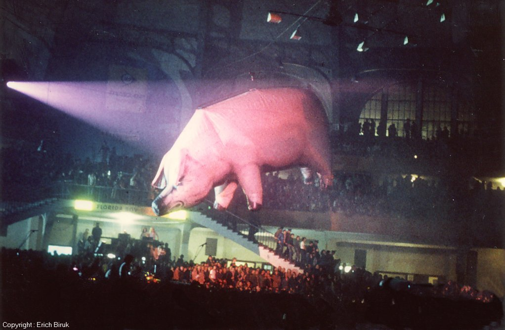 Image result for PINK PIG GOING ACROSS STADIUM FROM PINK FLOYD