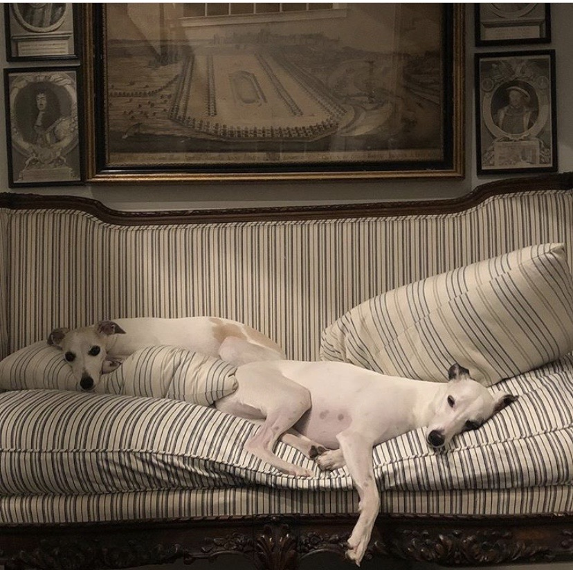 French Chateau Whippets: Georgianna & Ophelia