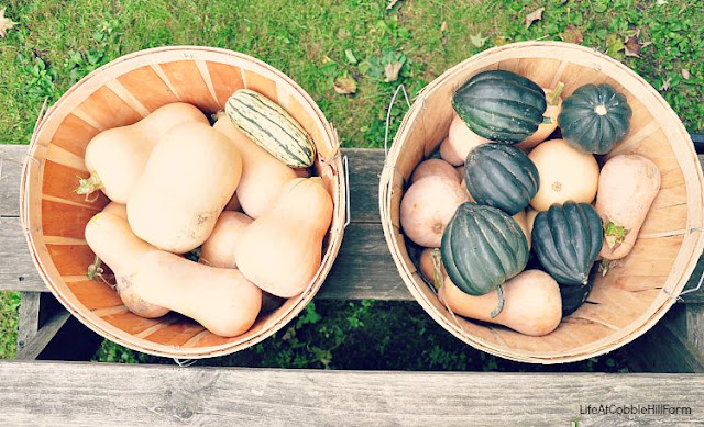 Winter Squash to freeze