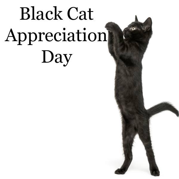 National Black Cat Appreciation Day