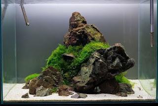 https://www.faktapopuler.com/2018/12/11-langkah-membuat-aquascape-untuk.html