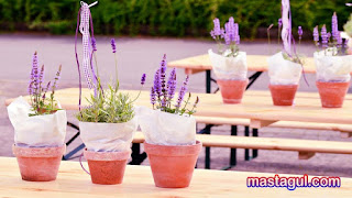 Tanaman Hias Lavender