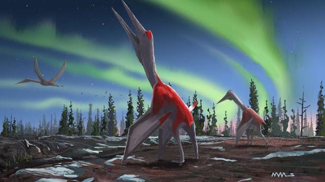 yeni keşfedilen cryodrakon boreas, keşfedilen en büyük uçan hayvanlardan biri