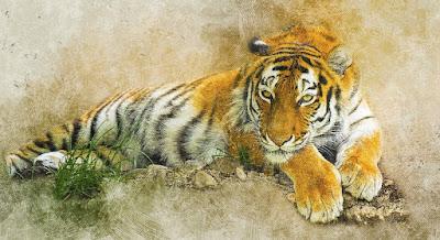 Tigre de la selva que reinas imponente