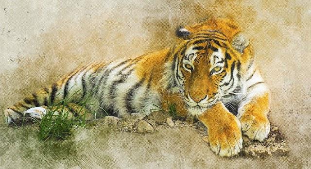 Tigre de la selva