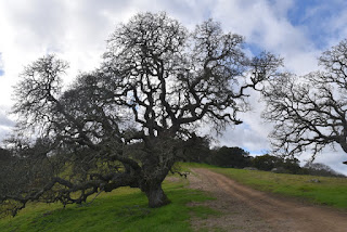 Mostly-bare trees along the trail, Rancho Cañada del Oro Open Space Preserve, San Jose, California