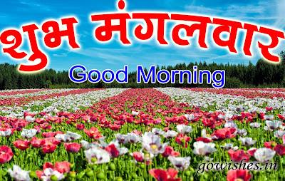 शुभ मंगलवार फोटो  Happy good morning Hindi Image