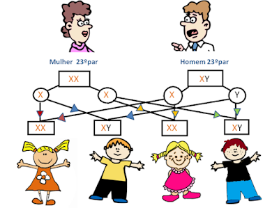 união dos 23 pares de cromossomos