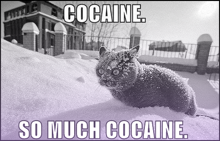Cocaine Cat - So Much Cocaine
