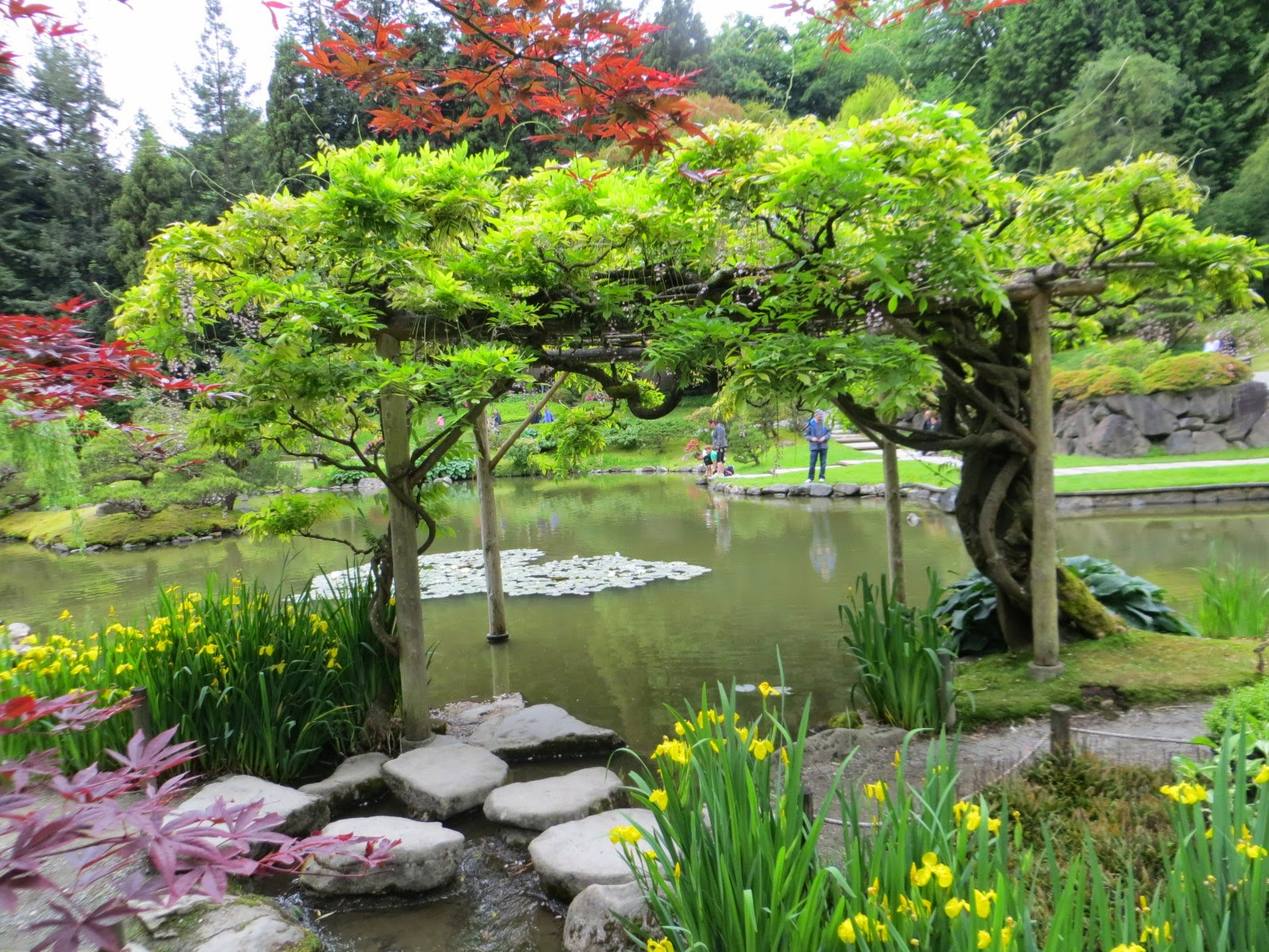 Seattle Japanese Garden: Seattle Japanese Garden Community Blog: May Going Fast In