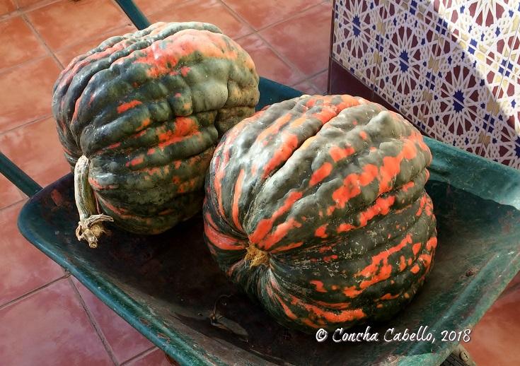 calabaza-otoño-nuestro-huerto