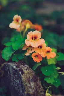 اجمل خلفيات الورد الرائعة