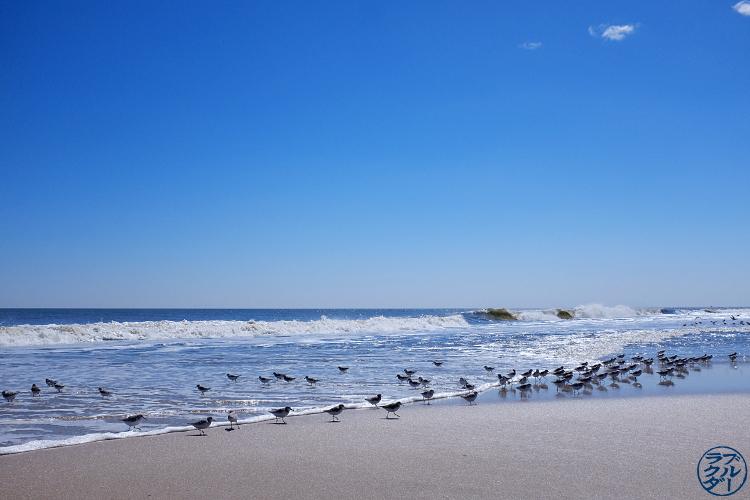 Le Chameau Bleu - Séjour à Fire Island -  Les Sand Piper et la plage