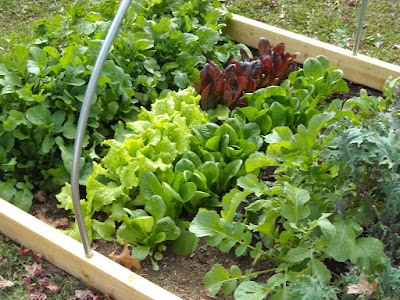 Simple and Easy Advice for Organic Gardening by Embellishinghome