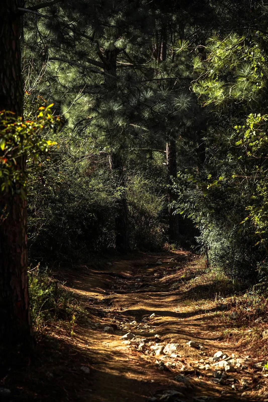 أحسن خلفيات الغابة للاندرويد