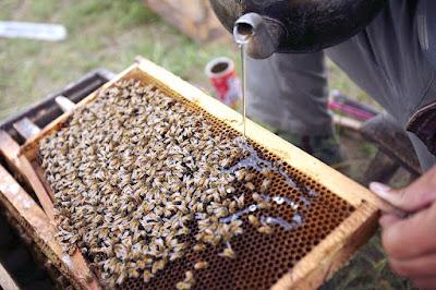 Honey bee feeding guide for beginners