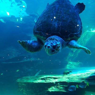 Turtle at the Two Oceans Aquarium