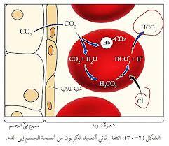 وظيفة الدم في نقل الغذاء والغازات