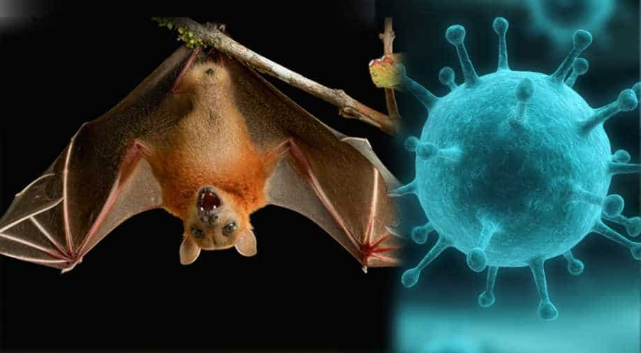 COVID-19 Pro Max!! A Virus Known As Nipah Virus Has Broken Out In China – Do You Think Nigerians Can Survive This?