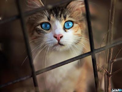 صوره حلوة جدا لقطة ذات عيون زرقاء