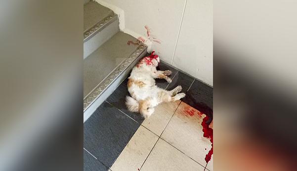 'Kepada pembunuh kucing, aku doakan kau mereput di neraka'