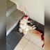'Kepada pembunuh Dan (kucing), aku doakan kau mereput di neraka'