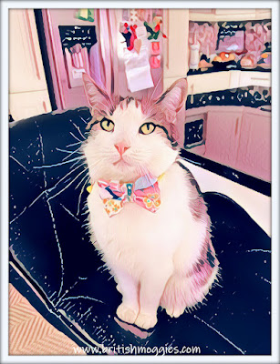 cute tabby cat, cat in a jazzy bowtie, bowtie cat, cat