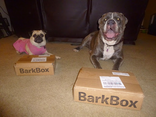 Our Barkbox Review April 2014 - Zoe's Big Dog Box